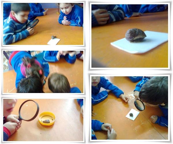 Los caracoles escuela el jard n for Caracoles en el jardin