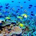 Petición para salvar la Gran Barrera de Coral en Australia supera las 770 mil firmas