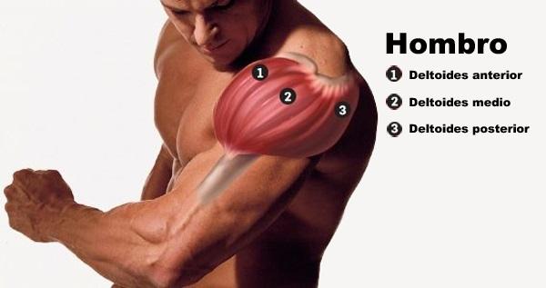 muscular hombros: