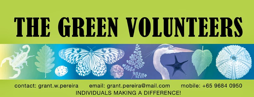 The Green Volunteers