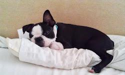 Finaste lilla hunden i hela världen !