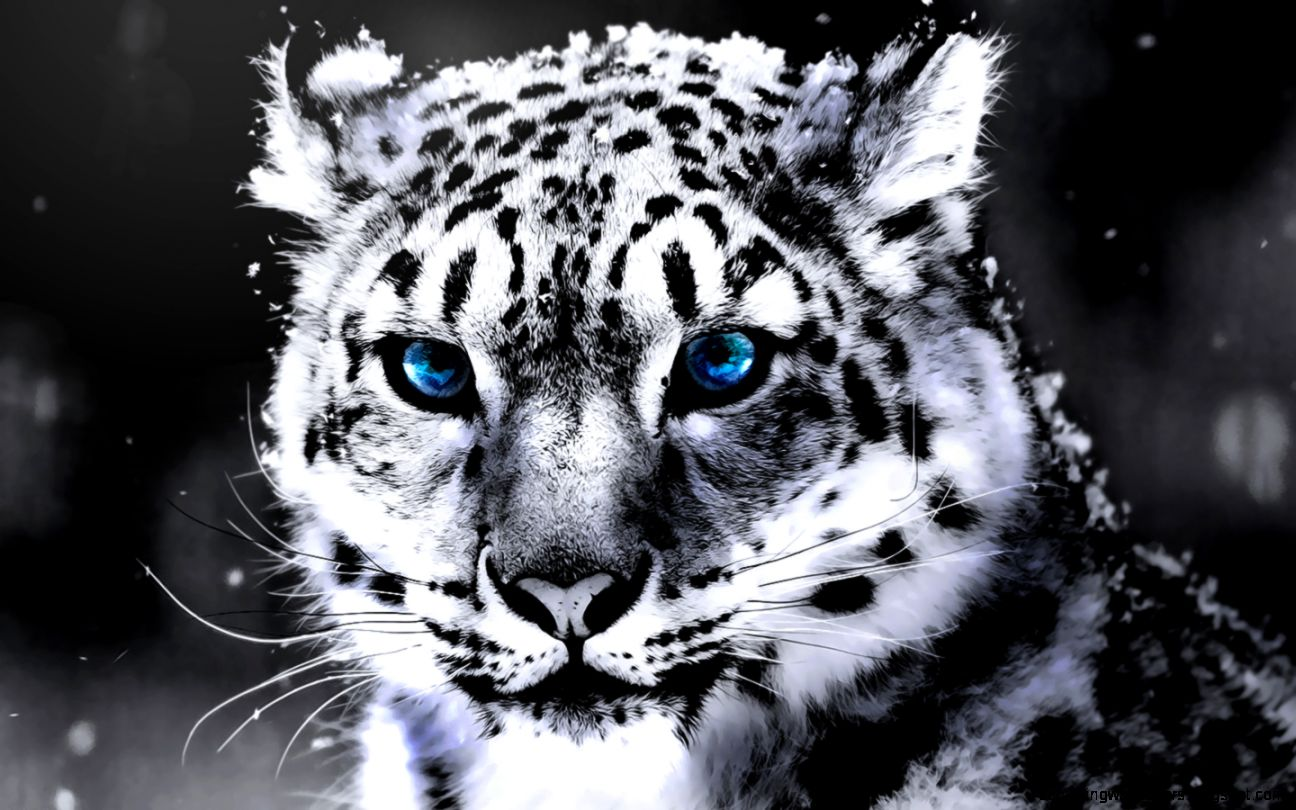 White Tiger With Blue Eyes Wallpaper 3d Amazing Wallpapers