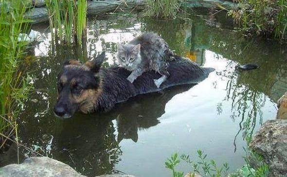 Пес спасает кота