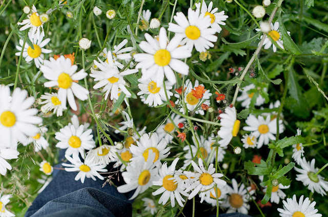 oxeye daisies and fox and cubs