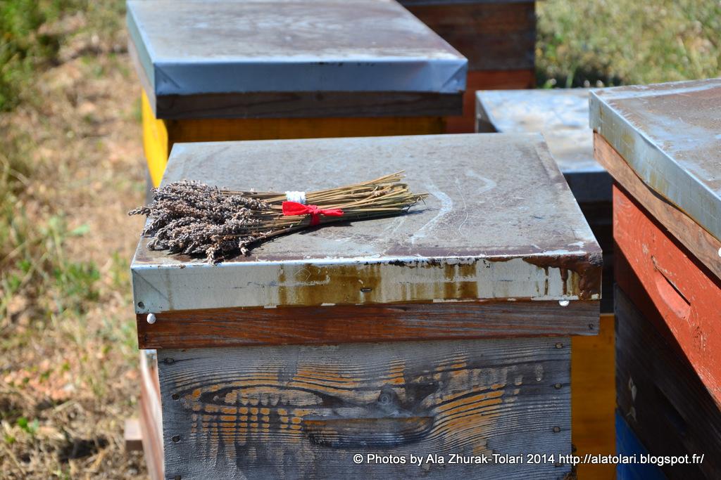 ruches des abeilles