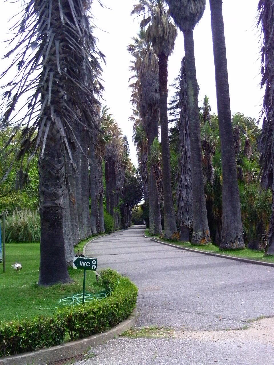 fotos de jardim tropical:Conjunto de fotos do jardim tropical de belem