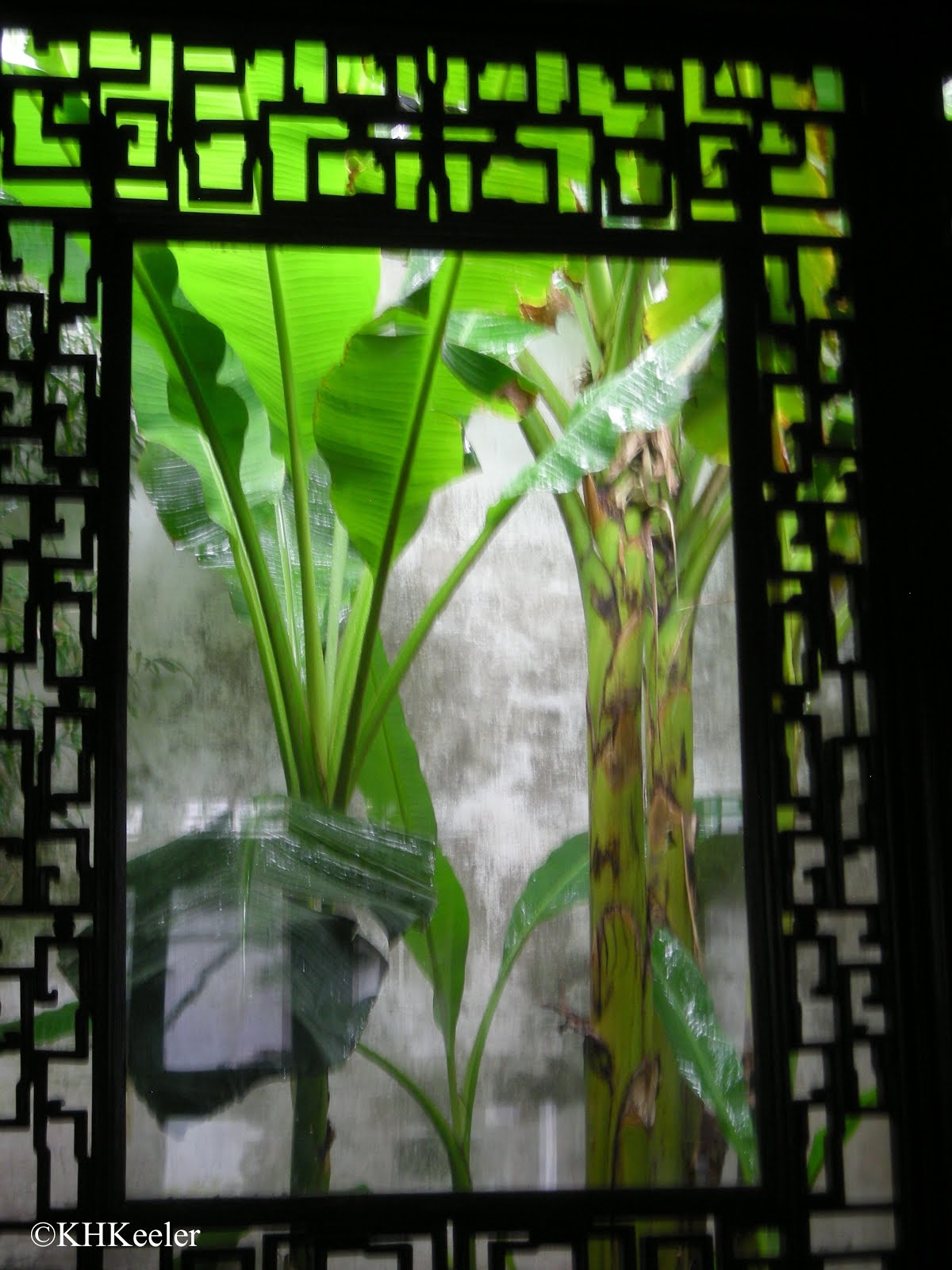 legend of banana plant The secrets of fake flavours  and it begins with a legend  banana can be mimicked most of the way with a simple compound called isoamyl acetate.