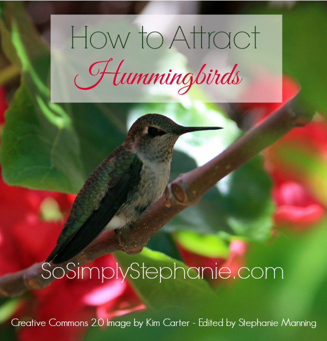 attract hummingbirds