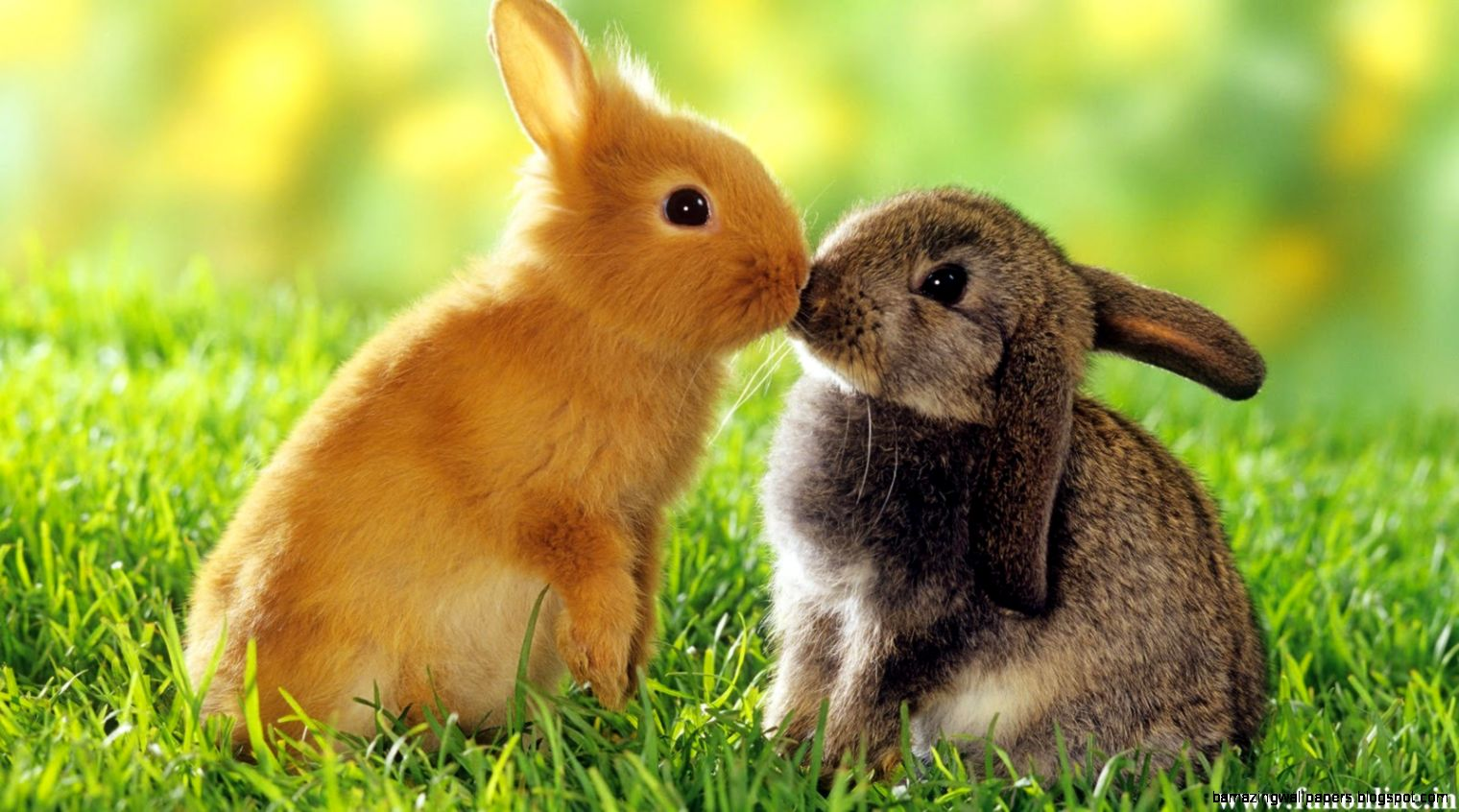 Baby Bunnies Wallpaper   Top Images
