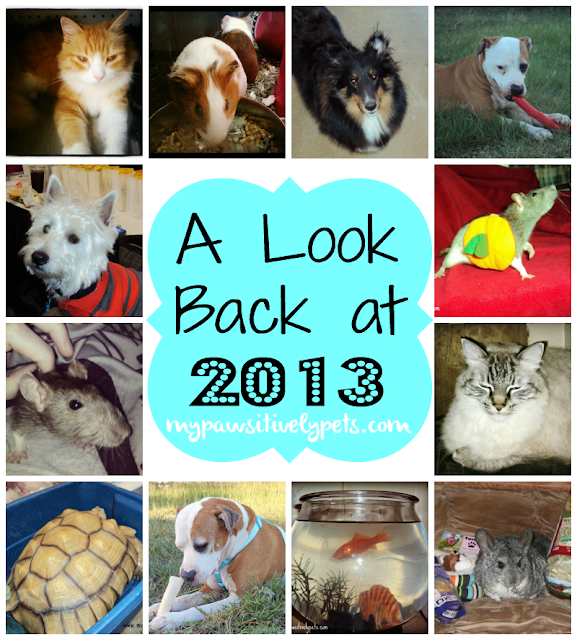 A Pawsitively Perfect Year