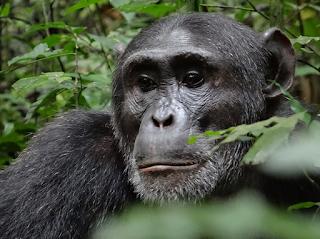 - 3 Days Kibale Forest - Chimp trekking Mini - Safaris - Lifetime Experience Safaris
