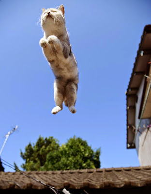 50 Funny Pictures of Cats Jumping