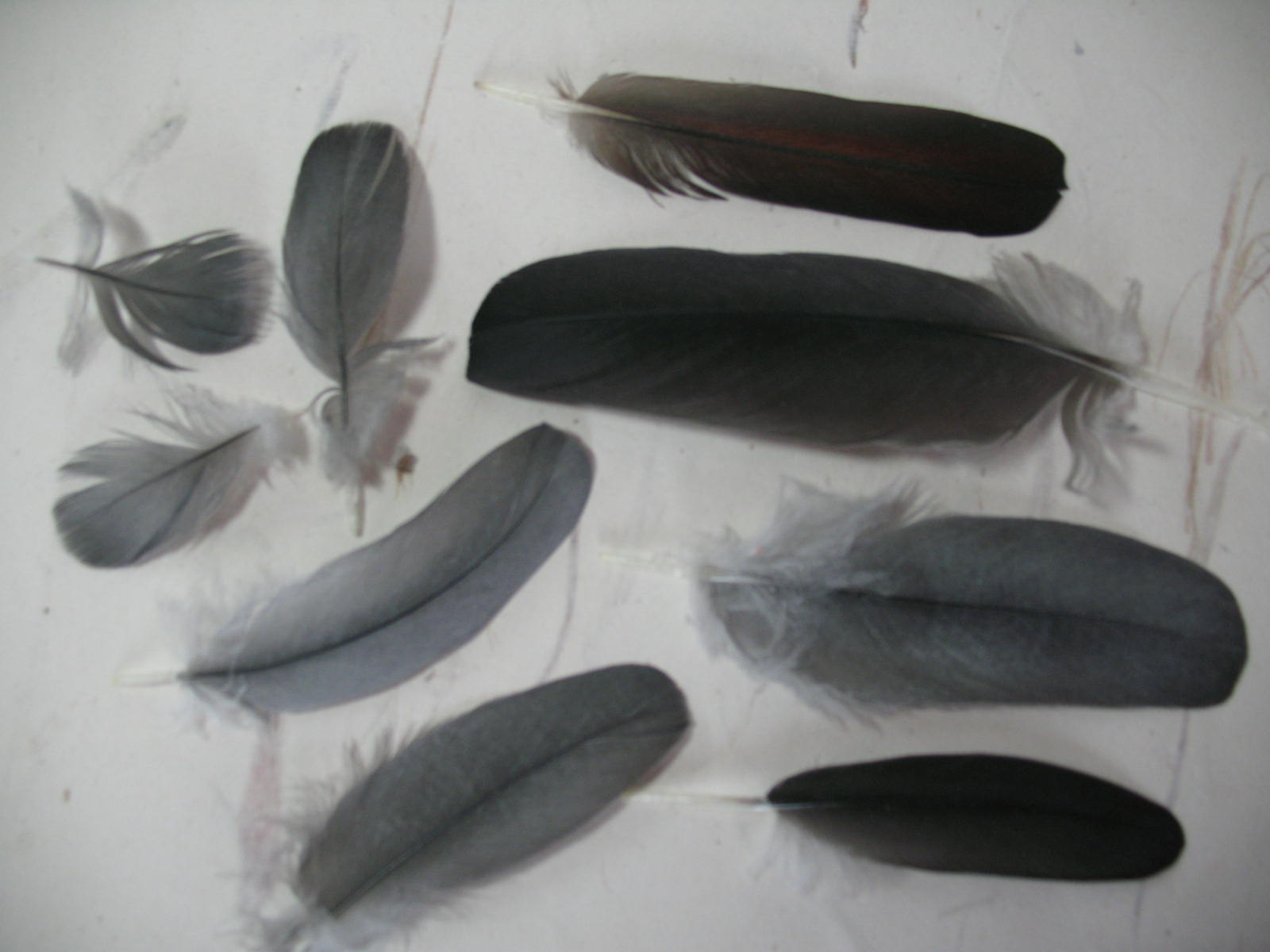 How to use a feather sexually