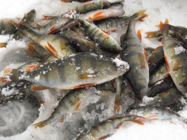 Рыболовные снасти своим руками