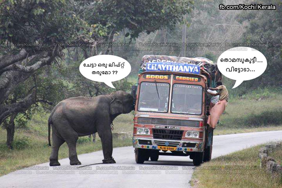 Elephant Attack In Kerala 2012 crazy malayalam: One l...