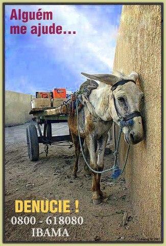 Denúncie mal tratos aos animais você é o defensor deles esse problema também é seu