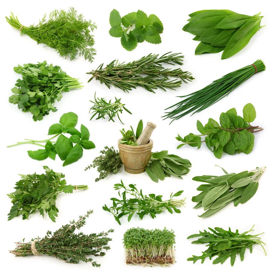 El huerto en macetas 20 plantas arom ticas y su uso en cocina - Plantas aromaticas en maceta ...