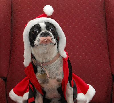 Perro+muy+feliz+en+Navidad Imagenes chistosas de perros navideño