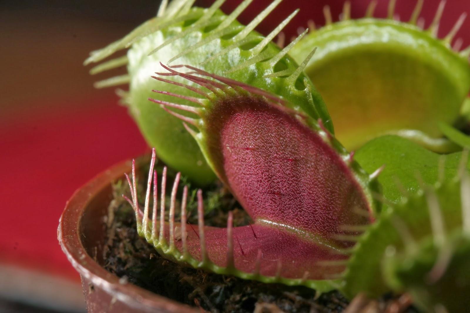 Perennes peque as colecci n de hojas y flores for Plantas hoja perenne