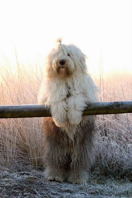 cachorro curiosidades