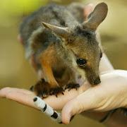 . leon imagenes de animales en hd