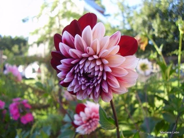 El jardin de mi abuela historia de unas semillas for Jardin 7 colores bernal