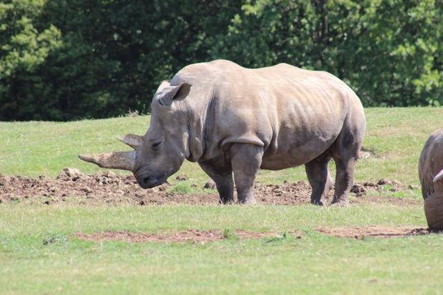 rhino whipsnade