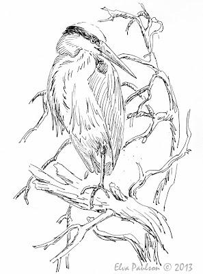 Great blue heron sketch