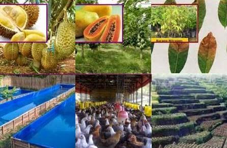 Jokowarino.com Tempat Berbagi Informasi Mengenai Pertanian Indonesia