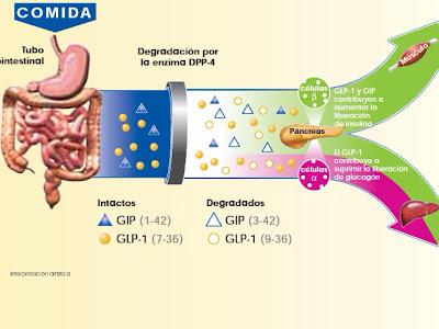 Una gira de expertos internacionales en diabetes recorre seis ciudades españolas para contribuir a la formación de endocrinólogos