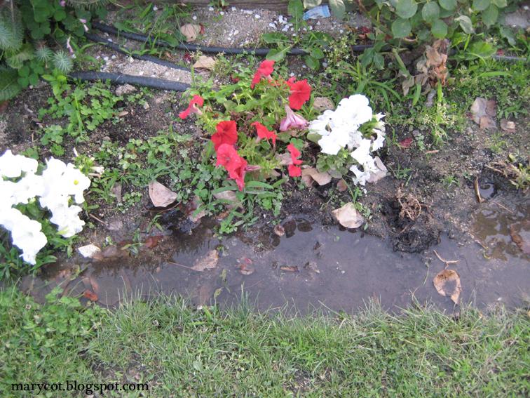Marycot agenda de julio 2012 for Drenaje de jardin
