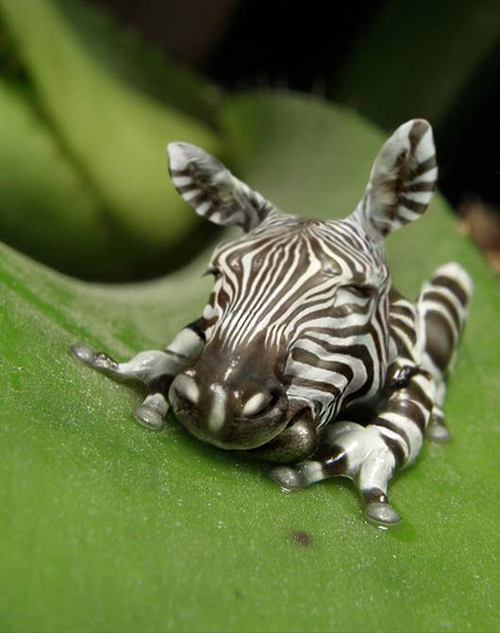 Coolest Looking Animals - Page 8 - BabyCenter