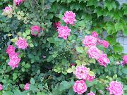 Cascade de fleurs de printemps