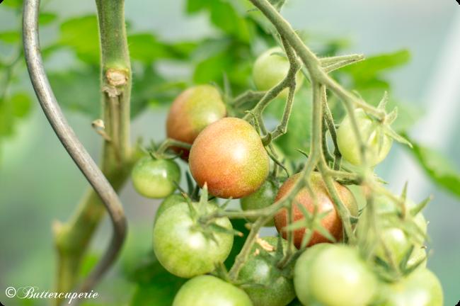 Tomate exotisch