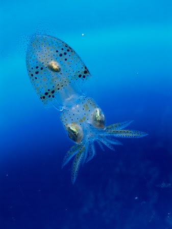 Squid Animal Wildlife