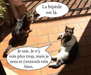 Deux chats qui font bronzette au soleil sur le balcon.