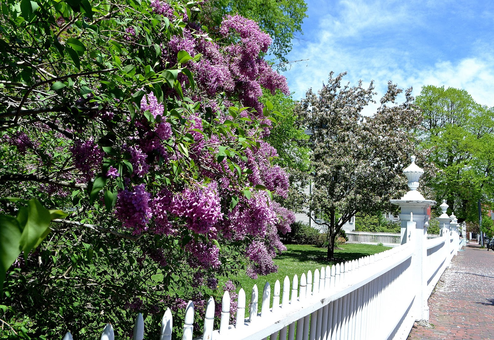 ropes mansion, salem, massachusetts, fence, white, lilac