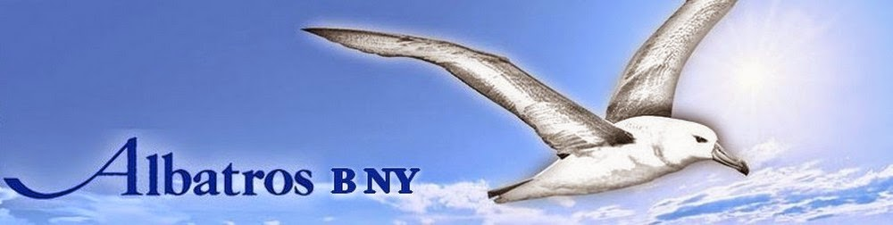 Albatros B NY