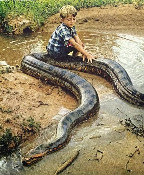 5 gambar ular terbesar di dunia yang seram reheart Image collections