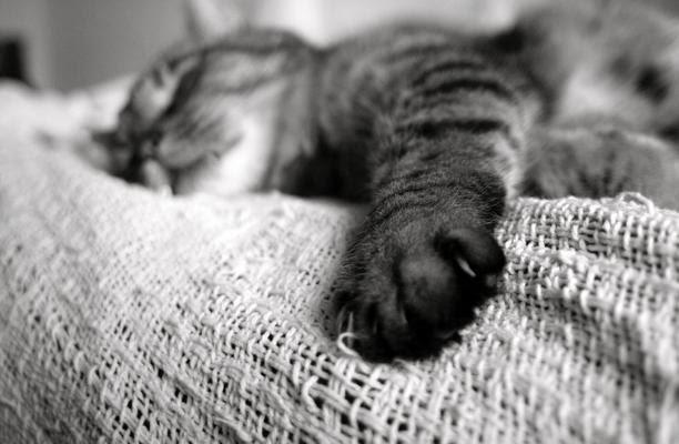 な 睡眠 パレオ 男
