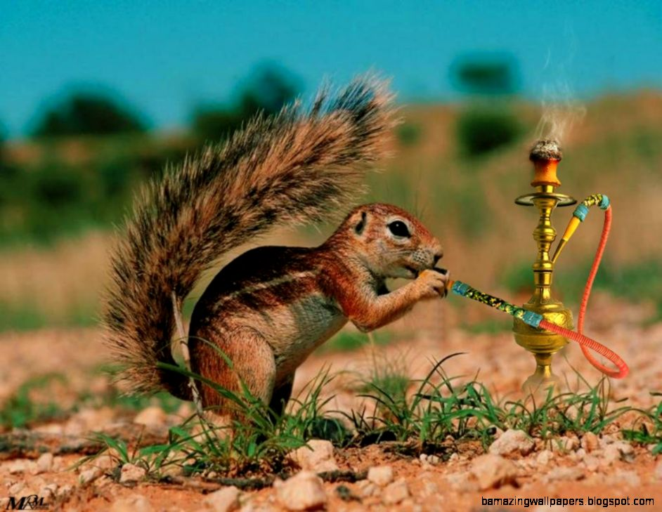 desktop cute and funny animals