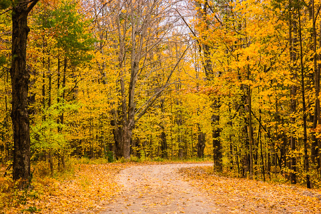 karen casebeer photography two roads diverged in a yellow