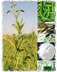 Guar Gum Cultivation Consultancy