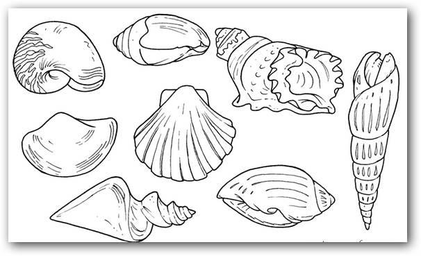 Dibujos para colorear caracoles de mar | Dibujos para Colorear