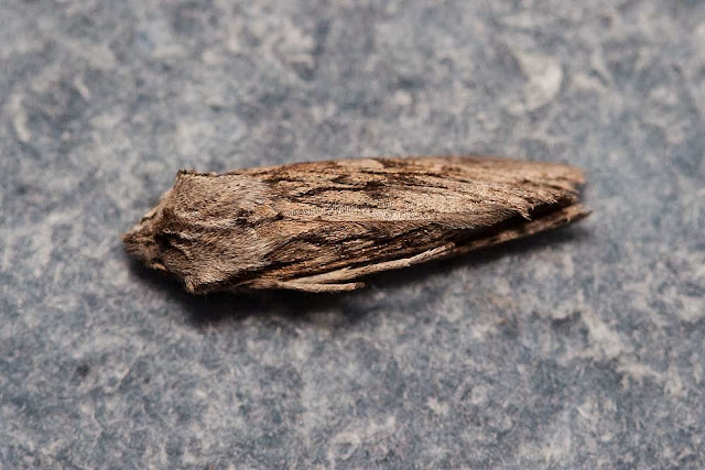 The Sprawler (looked dead to me!!)
