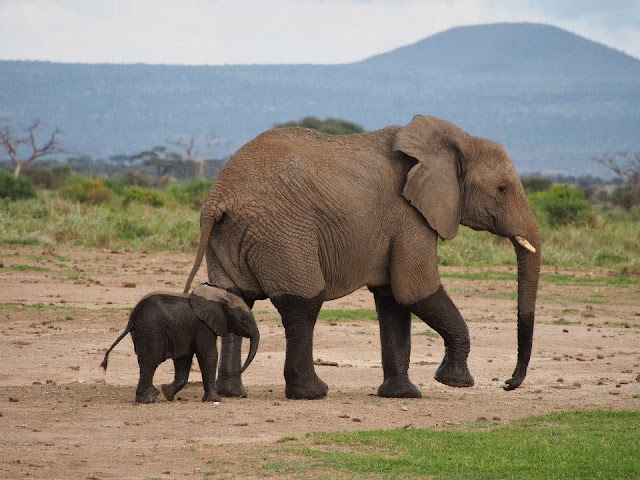 Funny animals of the week - 27 December 2013 (40 pics), baby elephant and mommy elephant