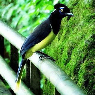Pássaro visto durante a caminhada pelo Circuito Inferior do Parque Nacional de Iguazú, na Argentina.
