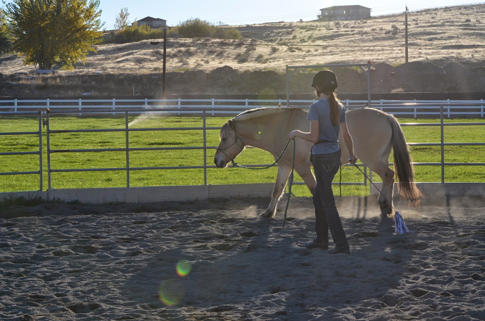 Lunging your horse