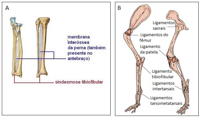 Resultado de imagem para artrologia perna