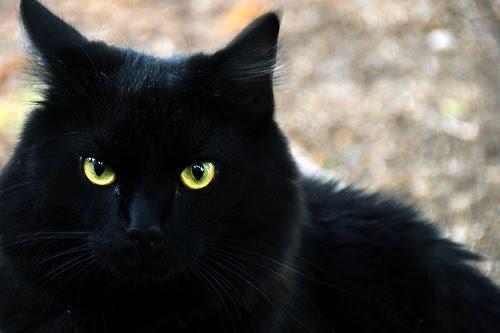 Kucing-Hitam.jpg
